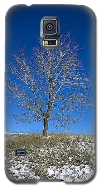 Galaxy S5 Case featuring the photograph Maple In Winter by Jessie Parker