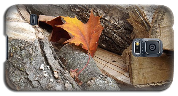 Maple Leaf In Wood Pile Galaxy S5 Case