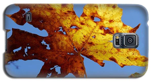 Maple Leaf On A Blue Sky Galaxy S5 Case