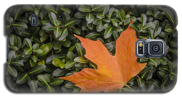 Maple Leaf On Boxwood Galaxy S5 Case