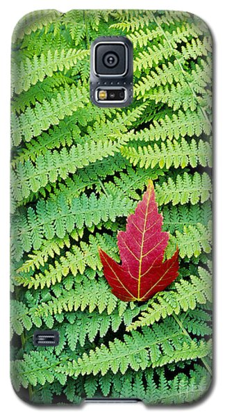 Galaxy S5 Case featuring the photograph Maple Leaf On Ferns by Alan L Graham