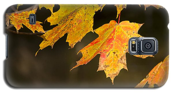 Maple Leaves In Autumn Galaxy S5 Case