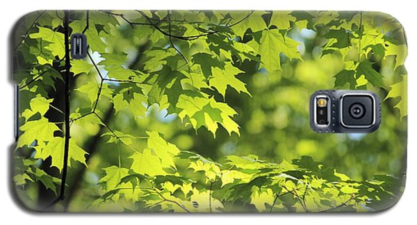 Maple Leaves In Spring Galaxy S5 Case by Dennis Lundell