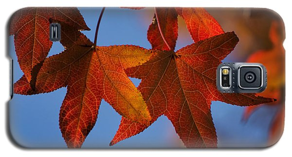 Galaxy S5 Case featuring the photograph Maple Leaves In The Fall by Stephen Anderson