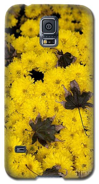 Maple Leaves On Chrysanthemum Galaxy S5 Case