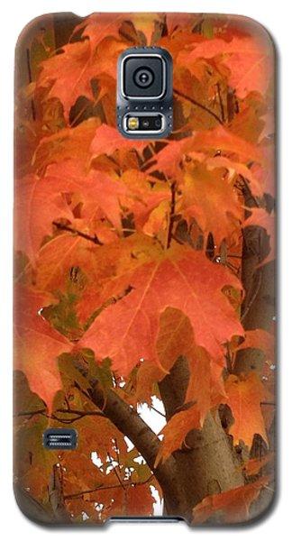 Maple Orange Galaxy S5 Case by Pema Hou