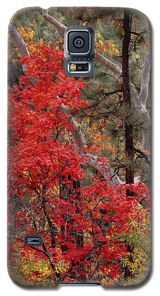 Maple Sycamore Pine Galaxy S5 Case