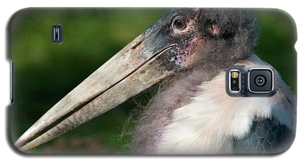 Marabou Stork Galaxy S5 Case by Nigel Downer