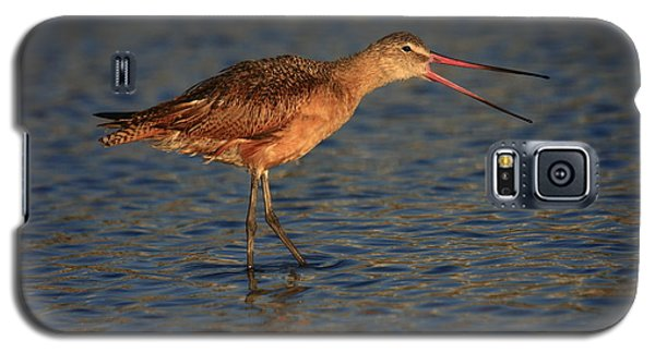 Marbled Godwit Call Galaxy S5 Case