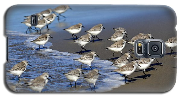 March Of The Sandpipers Galaxy S5 Case by Fraida Gutovich
