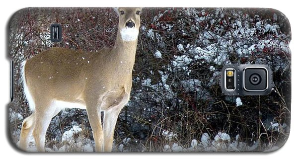March Snow And A Doe Galaxy S5 Case