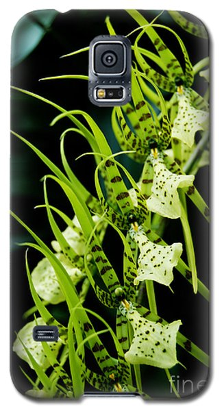 Galaxy S5 Case featuring the photograph Marching Orchids by Eva Kaufman