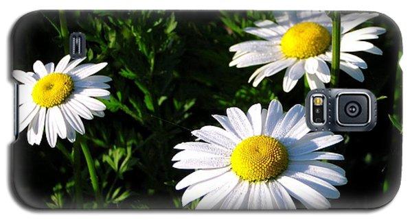 Margeritaville Galaxy S5 Case