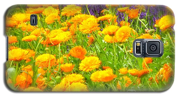 Marigolds And Lavender Galaxy S5 Case by John Colley