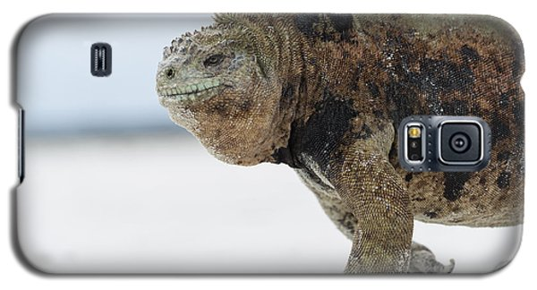 Marine Iguana Male Turtle Bay Santa Galaxy S5 Case