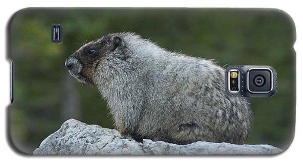 Marmot Galaxy S5 Case