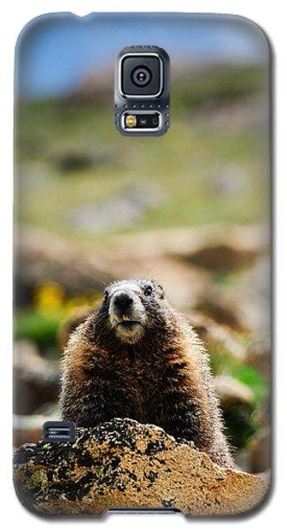 Marmot On A Rock Galaxy S5 Case