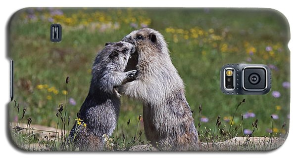 Marmots In Glacier Np Galaxy S5 Case