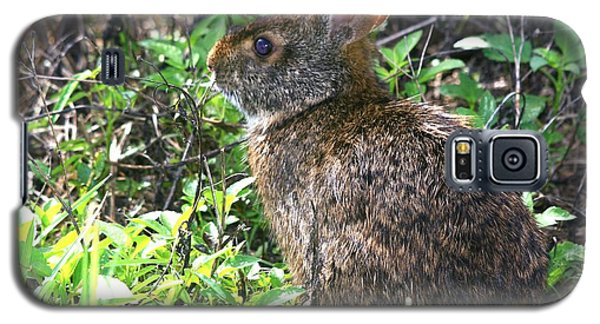 Marsh Rabbit Galaxy S5 Case