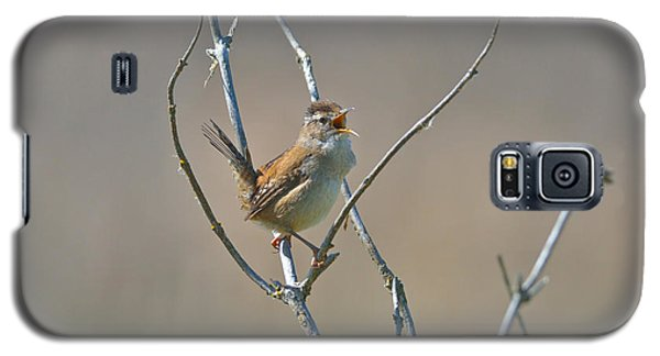 Galaxy S5 Case featuring the photograph Marsh Wren by Kathy King