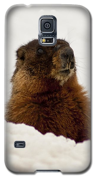Marty The Marmot Galaxy S5 Case by Daniel Hebard