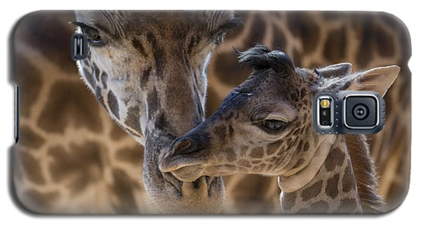 Masai Giraffe And Calf Galaxy S5 Case