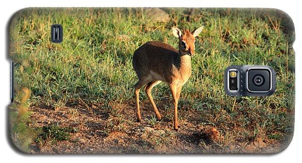 Masai Mara Dikdik Deer Galaxy S5 Case