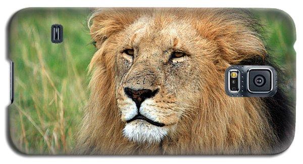 Masai Mara Lion Portrait    Galaxy S5 Case