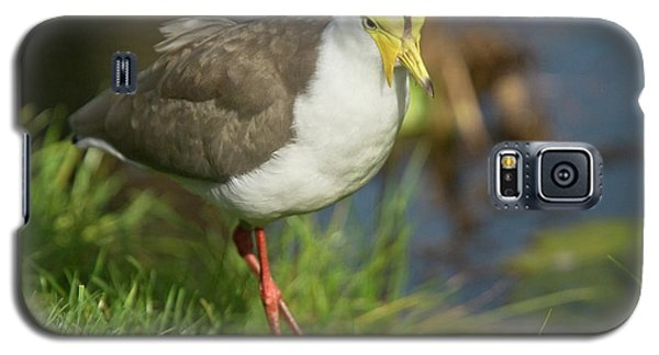 Masked Lapwing Galaxy S5 Case