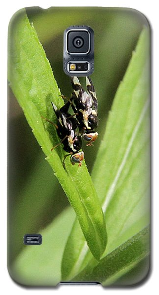 Mating Fruit Flies Galaxy S5 Case by Doris Potter