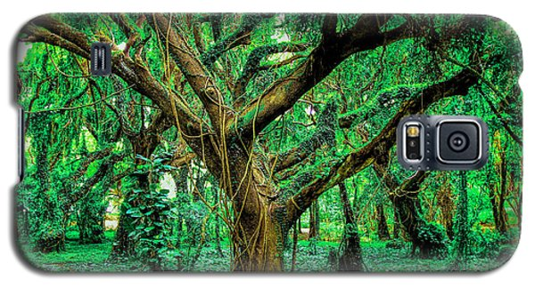 Maui Tree Galaxy S5 Case by Robert  Aycock