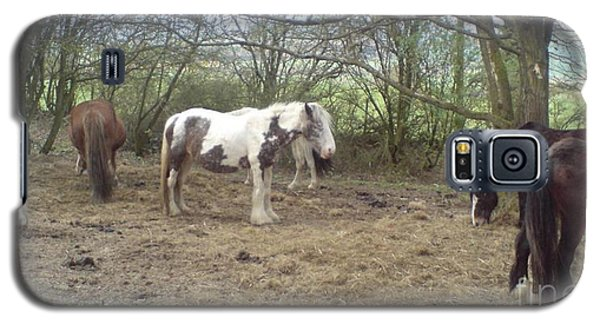 Galaxy S5 Case featuring the photograph May Hill Ponies 1 by John Williams