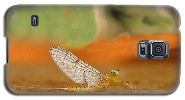 Mayfly Art Galaxy S5 Case