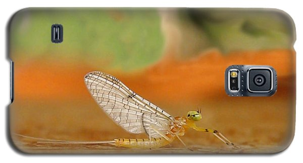 Mayfly Art Galaxy S5 Case