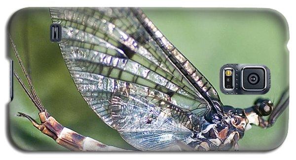 Mayfly Galaxy S5 Case