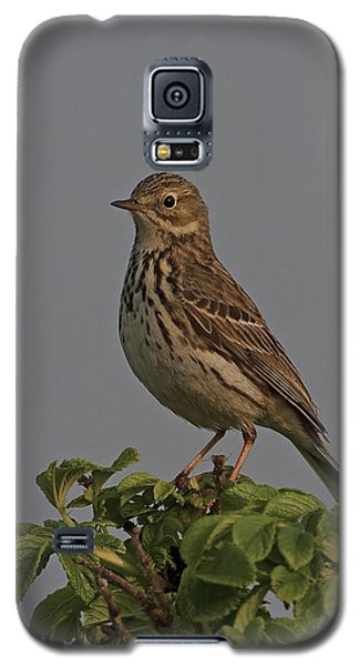 Meadow Pipit Galaxy S5 Case