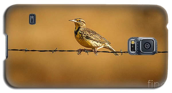 Meadowlark And Barbed Wire Galaxy S5 Case by Robert Frederick