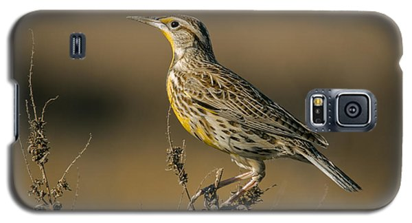 Meadowlark On Weed Galaxy S5 Case by Robert Frederick