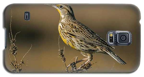 Meadowlark On Weed Galaxy S5 Case