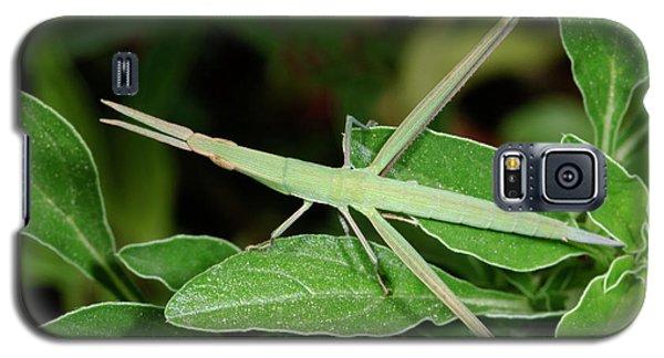 Mediterranean Slant-faced Grasshopper Galaxy S5 Case by Nigel Downer