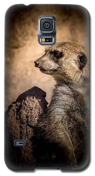 Meerkat 12 Galaxy S5 Case by Ernie Echols