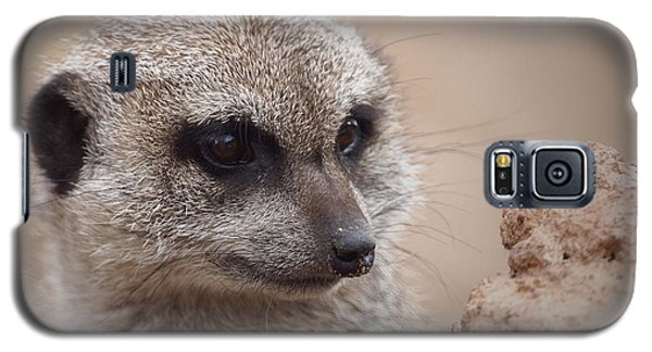 Meerkat 7 Galaxy S5 Case by Ernie Echols
