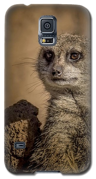 Meerkat Galaxy S5 Case by Ernie Echols