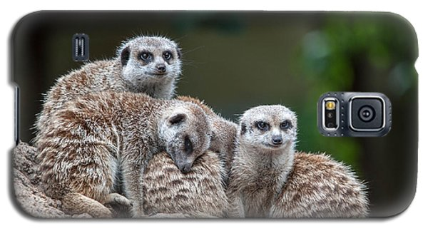 Meerkat Family Galaxy S5 Case