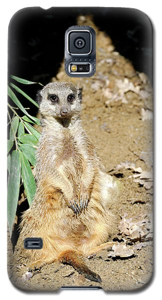 Meerkat Galaxy S5 Case - Meerkat by Heiti Paves