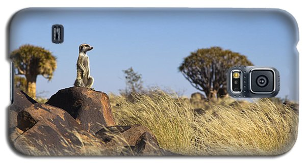 Meerkat Galaxy S5 Case - Meerkat In Quiver Tree Grassland by Vincent Grafhorst