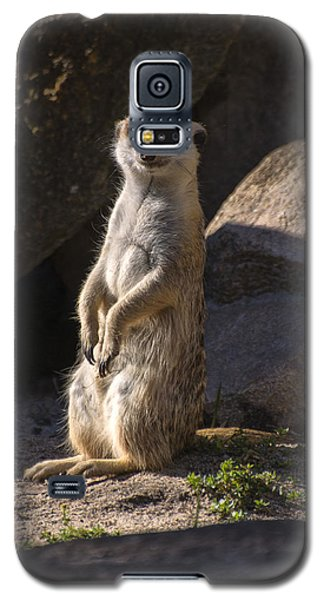 Meerkat Looking Forward Galaxy S5 Case by Chris Flees