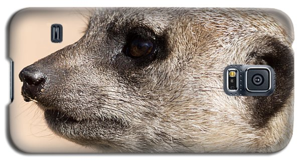 Meerkat Mug Shot Galaxy S5 Case by Ernie Echols