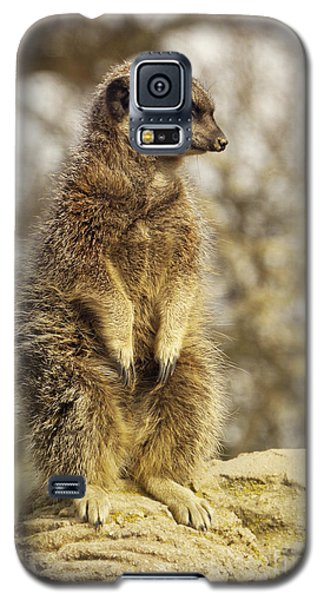 Meerkat Galaxy S5 Case - Meerkat On Hill by Pixel Chimp