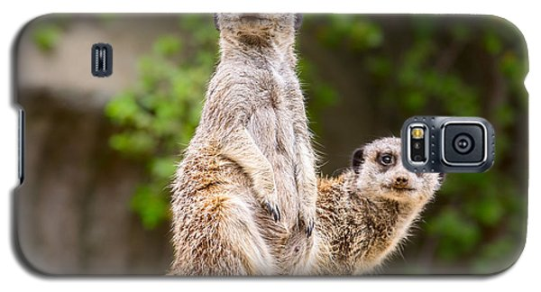 Meerkat Pair Galaxy S5 Case by Jamie Pham